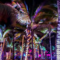 Palm trees with lighting